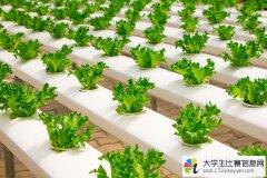 第五届中国蔬菜摄影大赛